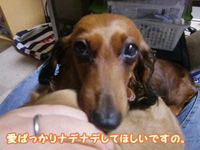 2012_0105_191224-CIMG7619.jpg