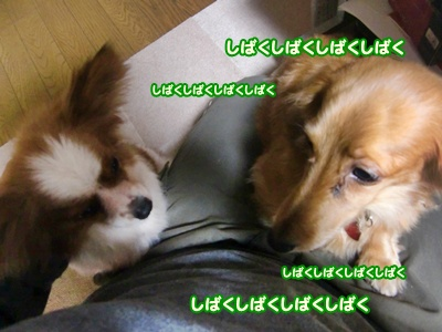 2012_0215_164619-CIMG8627.jpg