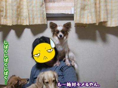2012_0215_171836-CIMG8635.jpg