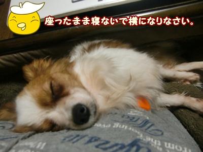2012_0223_021144-CIMG8779.jpg