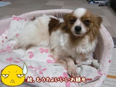 2012_0226_213632-CIMG8949.jpg