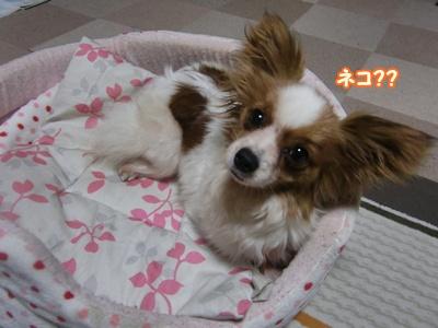 2012_0226_213712-CIMG8953.jpg