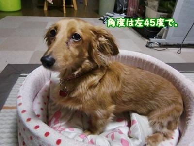 2012_0226_214118-CIMG8957.jpg
