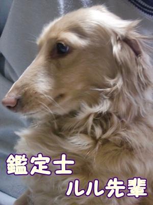 2012_0305_090520-CIMG9160.jpg
