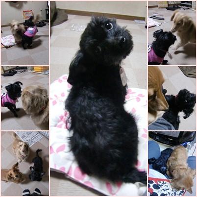 cats_20111230162544.jpg