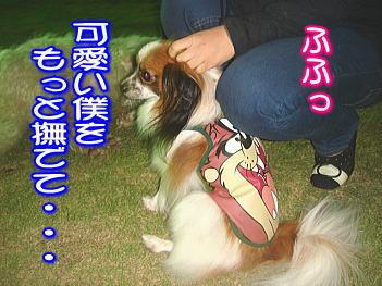 20071102205721.jpg