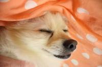 寝心地がイイらしいです