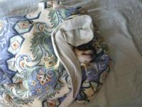 毛布の上で寝てたので