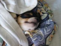 毛布ではさんでみたそうです