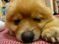 フテ寝するムフ