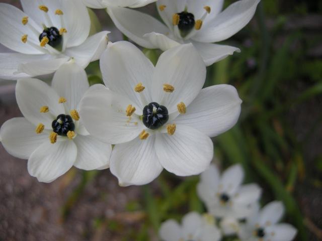花白い白い
