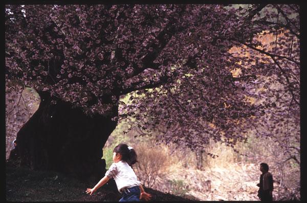 桜 女の子3