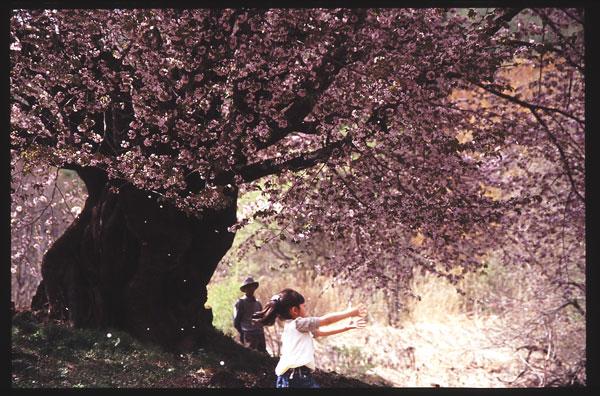 桜 女の子1