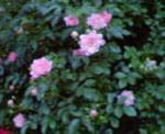 200606016.jpg