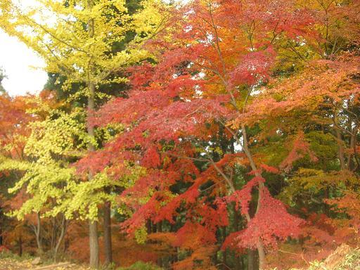 一丁平の紅葉