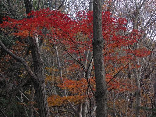 南高尾の紅葉