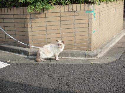 ナナお散歩 9