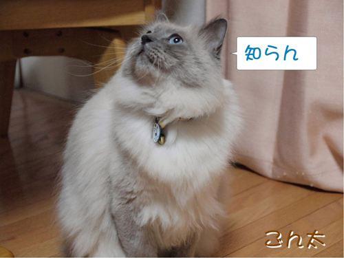 あそぼ (9)
