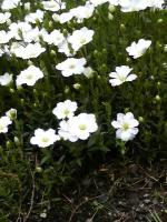 20080524白い花jpg