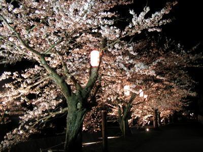 sakura2005.jpg