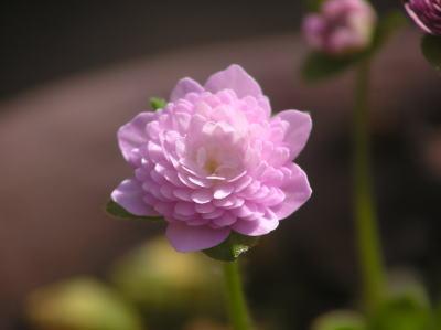 yoshinosato.jpg