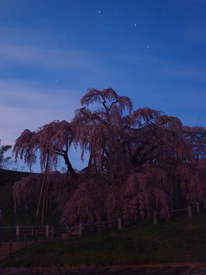 三春町滝桜4