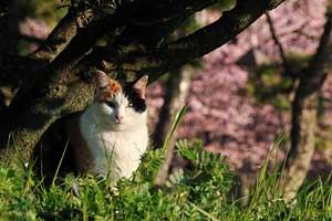 大寒桜猫@日比谷公園