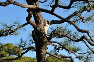 木登り猫@日比谷公園