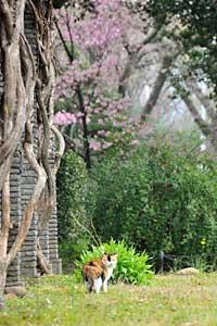 陽光桜猫@日比谷公園