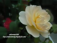 KIF_5367-1.jpg