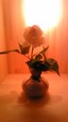 090313_001422_ed.jpg