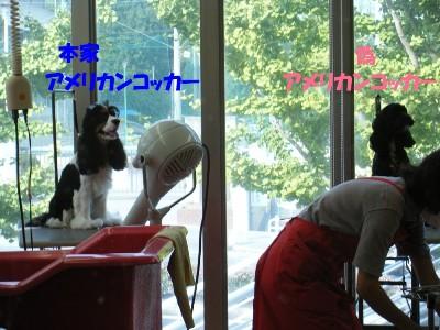 saku&tema 1830261764