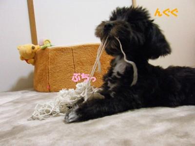 saku&tema 1830261850