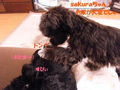 saku&tema 1830261875