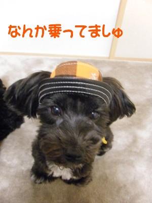 sakuてま帽子 004