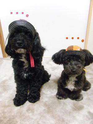 sakuてま帽子 014