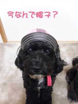 sakuてま帽子 003