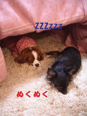 010_20081210231959.jpg