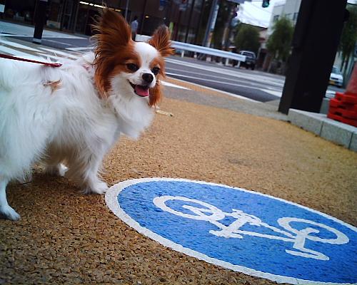 広小路の自転車道路で・・・