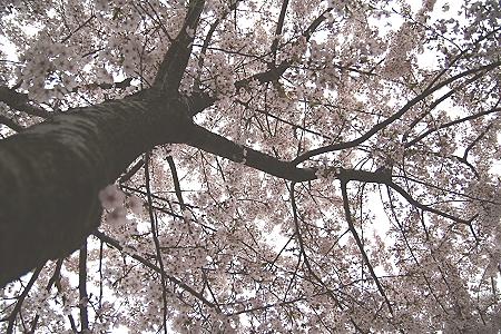 20070418_0257.jpg