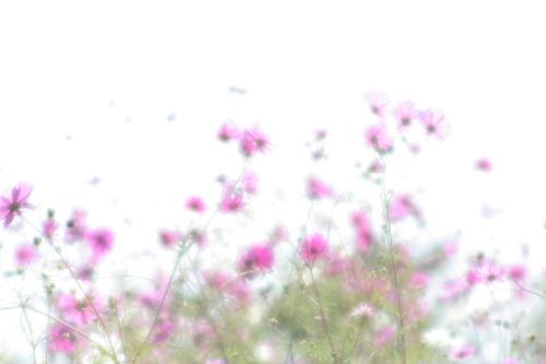 20071023_5081.jpg
