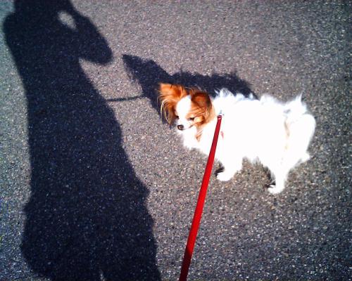 サリーと影