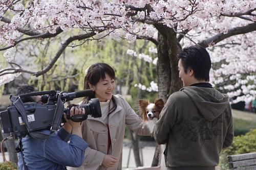 桜の下でインタビュー