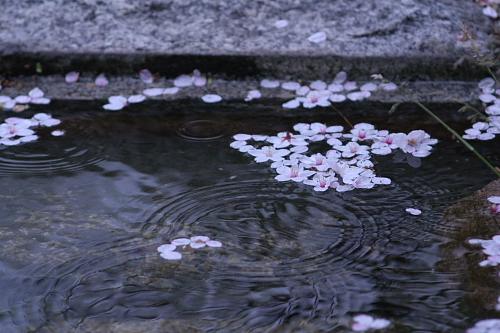 小雨の早川堀