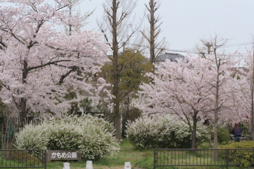 春のかもめ公園はすごい!