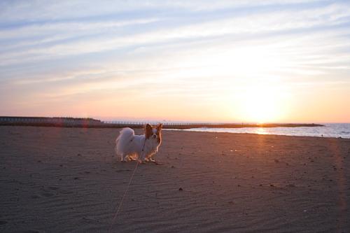 海岸清掃は終わったみたい。浜辺にゴミがなかった