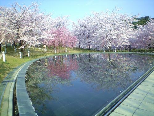 撮影の定番!池に写る桜の丘