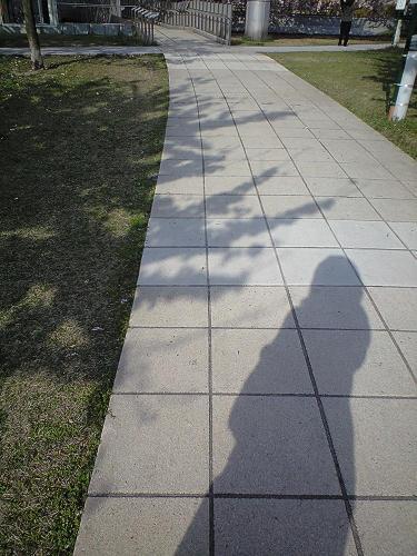 桜の影と私