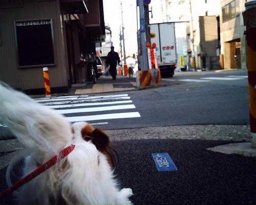 犬が来たっ!