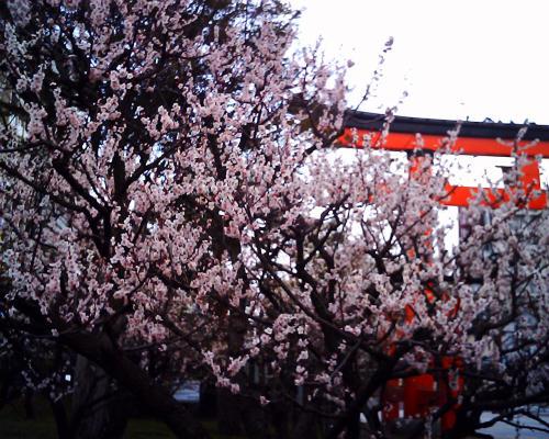 梅を見に白山神社に行ったのは今年4回